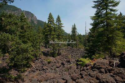 Willamette Forest