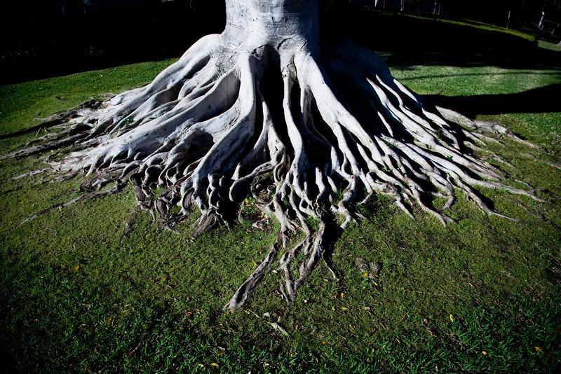 treeroot.jpg