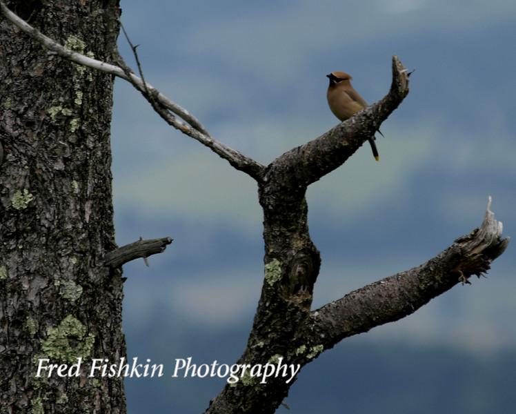 skyline bird 2.jpg