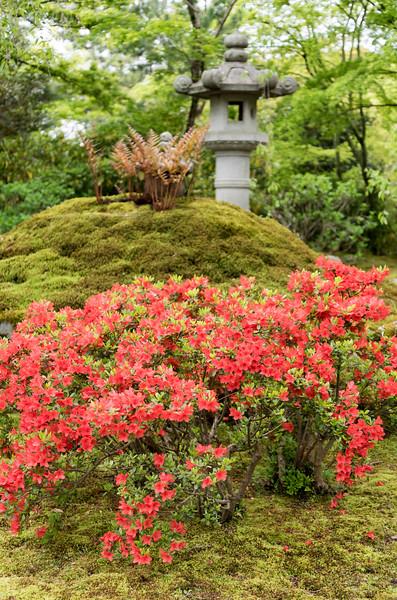 Zen garden of Tenryuji Temple, Kyoto
