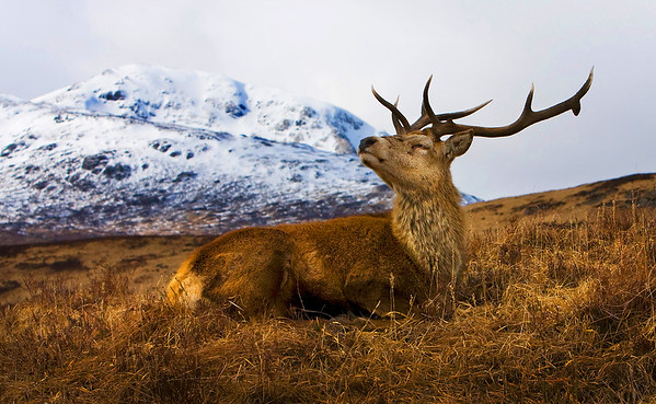 Pictures of Birds and Animals.  Scotland