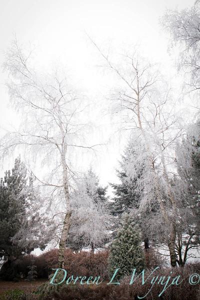 Monrovia winter frost landscape_9285.jpg