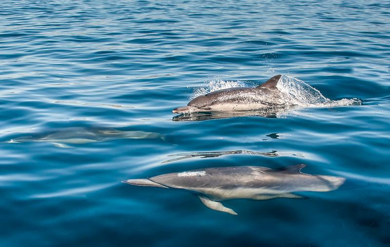Dolphin-21.jpg
