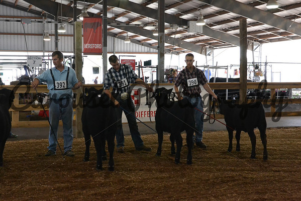 2013-NYSF-Angus-Ring