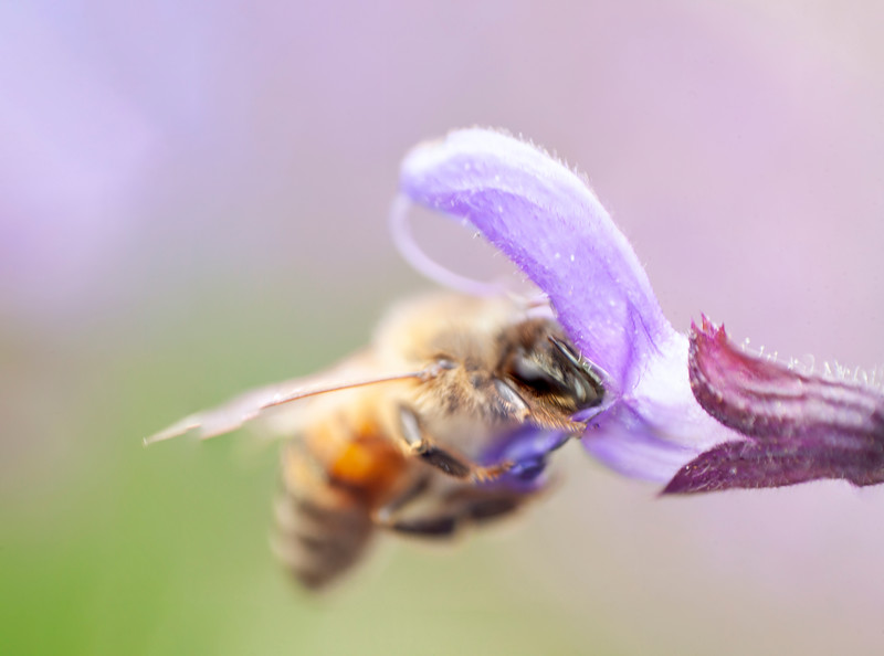 Bee 2.jpg