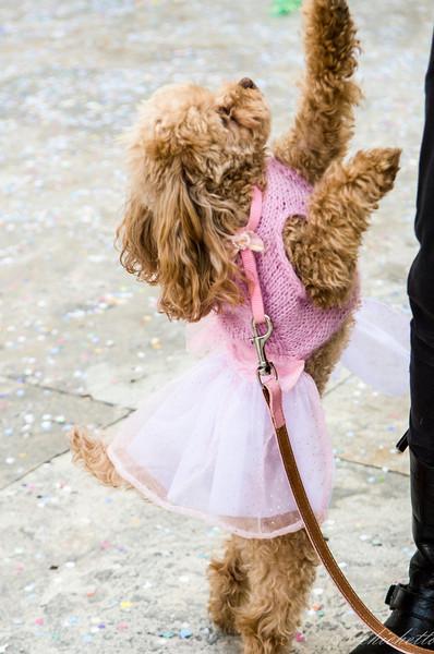 Un carnevale da cani