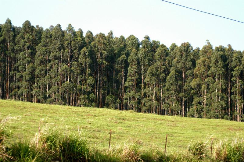 20080416- Hawaii 21- Weds Morning Road Trip DSC_3557-2.jpg