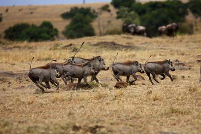 Africa 2013 - Best of