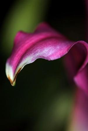 petals edge