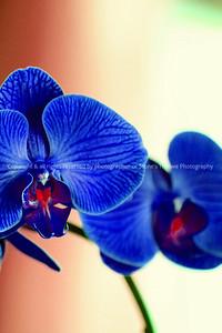 017-flower-nlg-17feb06-0080