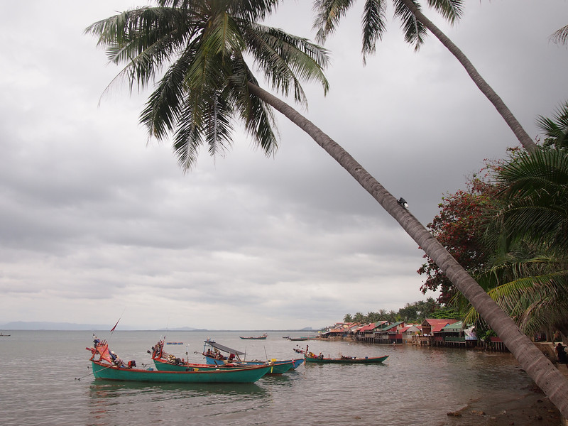 PB163802-boats-and-coconut-trees.JPG