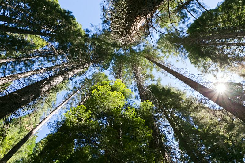 Sequoia_0118.jpg
