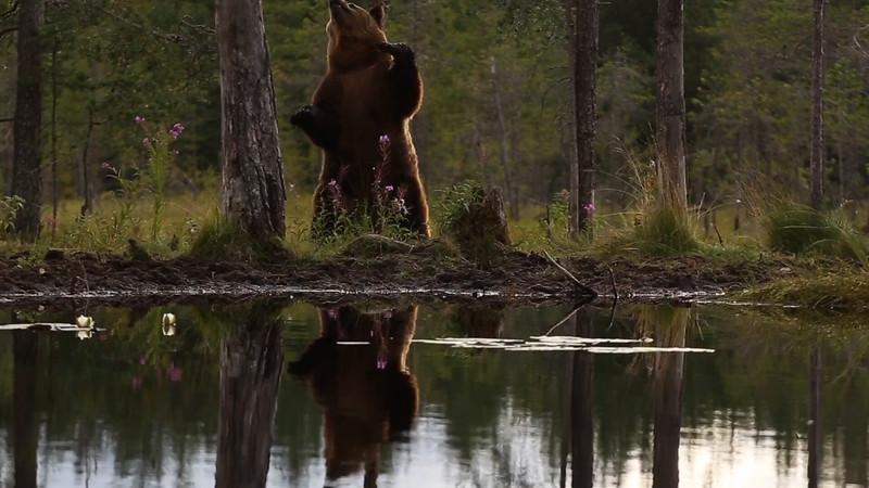Brown Bear Scrubbing