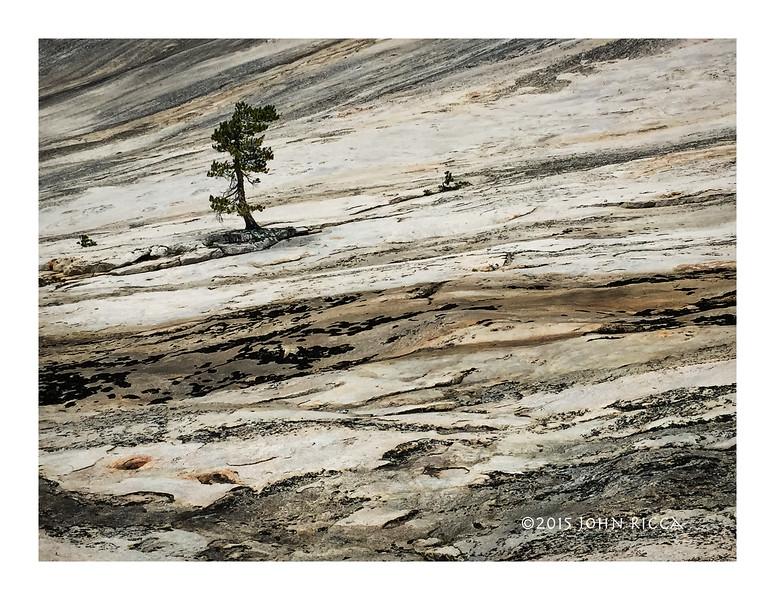 Tree & Texture.jpg