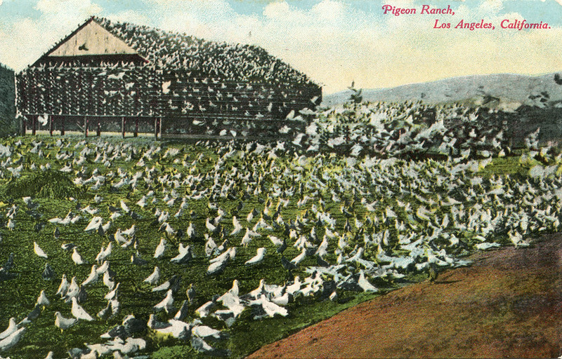 Pigeon_Ranch_Los_Angeles_California_140.jpg