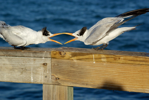 Select Bird Images