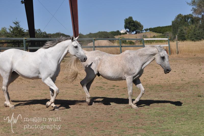 EB&Horses-127.jpg