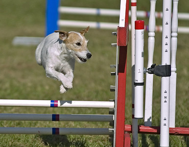 Dog Agility: Willingboro 10/29/06