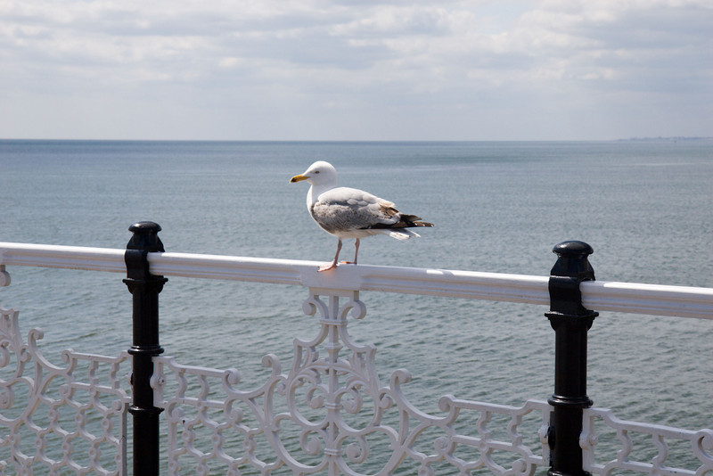 He came to make our acquaintance, Brighton Pier