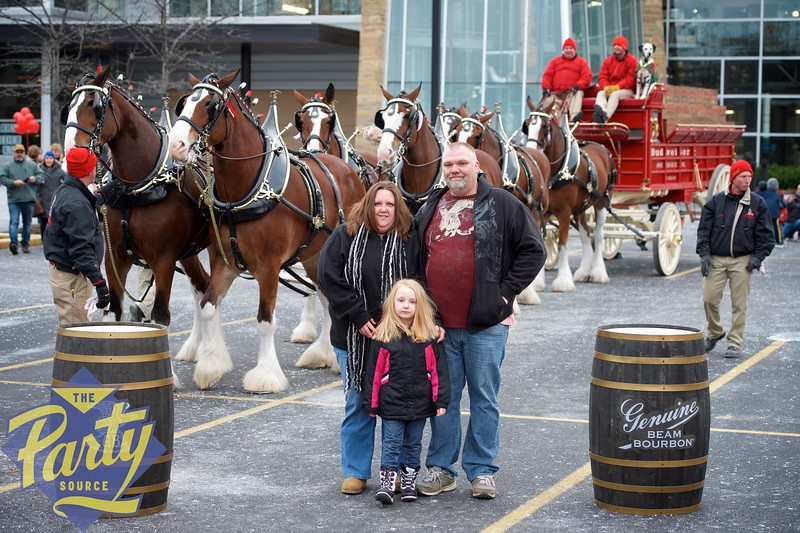 Clydesdale Portraits 63.jpg