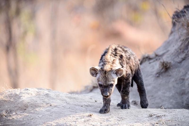 LeopardHills-20150826-3177.jpg