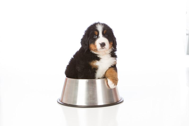 2013-Pearson Pups-Jun02-0337.jpg