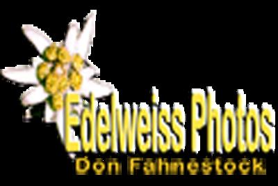 Branding Logo.png