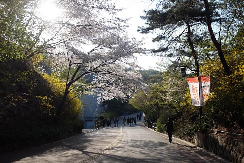 Namsan_Cherry_Blossoms_PhotoWalk-0109.jpg
