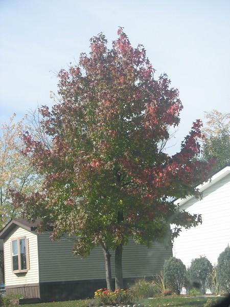 Fall pics 2008 009.jpg