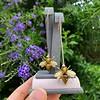 Vintage Bee Conversion Earrings 14