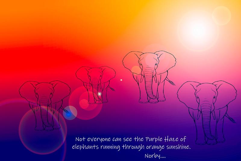 Elephants sunshine.jpg