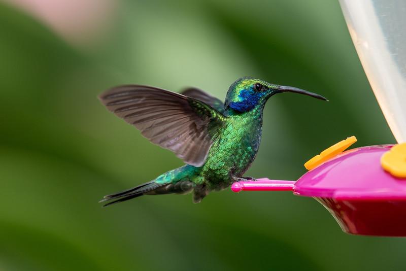 Costa Rica 2015-5908.jpg