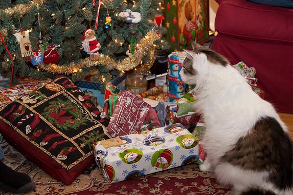 Presents with Galuskas
