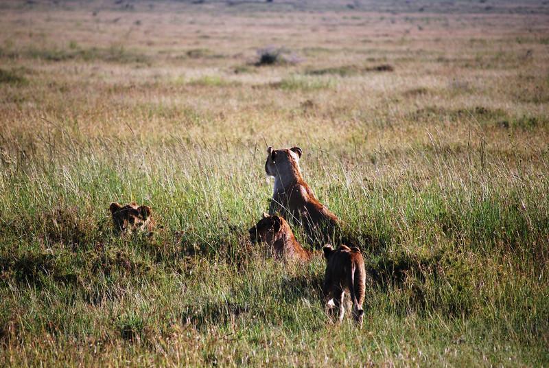 Serengeti (118).JPG