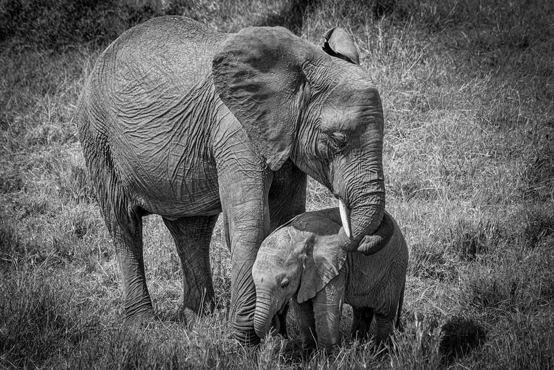 Kenya-102013-721-Edit-Edit.jpg