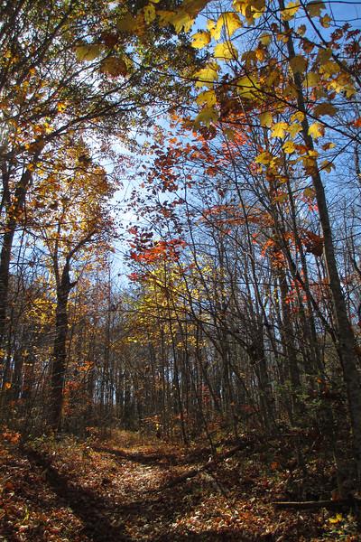 Mac's Gap Trail - 3,950'