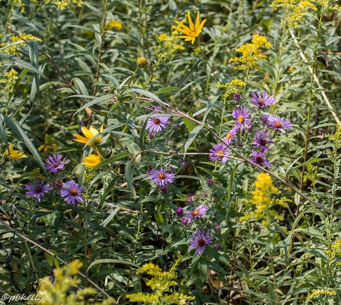 wildflower montage 090415.jpg