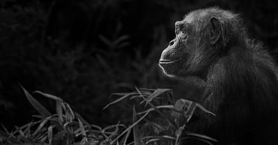 """The Thinker"" (photography) by Shawna Hinkel"