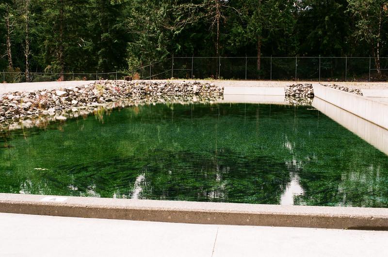 Salmon Spawning Pool