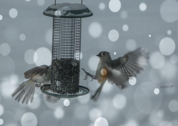 BirdfeederSunlightsnow.jpg