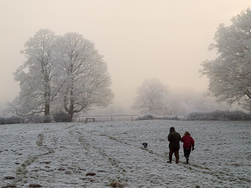 #2 Hoar frost and mist by zbahu