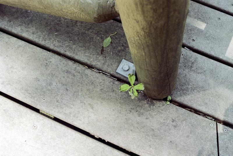Life through the cracks