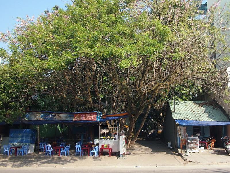 P1317315-tree-cafe.JPG