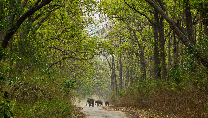 Small-part-of-elephant-family-corbett-woodland.jpg