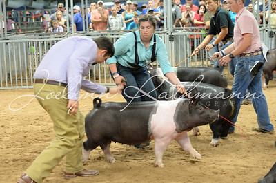Hog Ringshots - Grand Drive & Showmanship