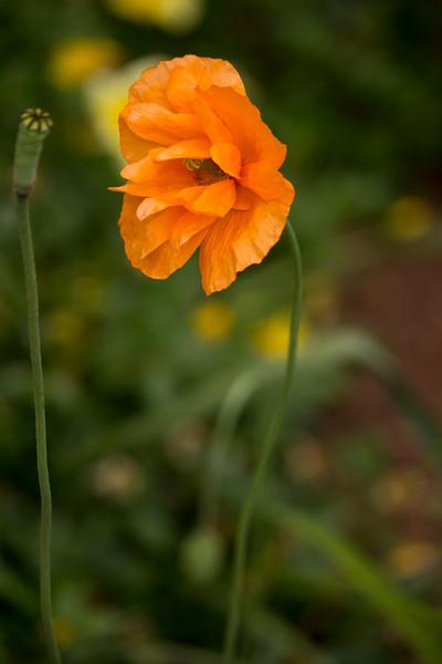 KoRedfield-Floral07.jpg