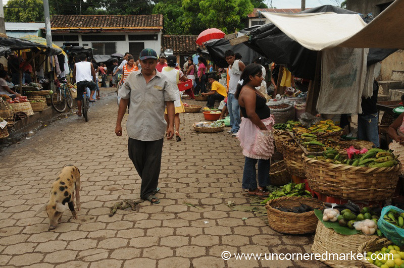 And This Little Pig Went to Market  - Granada, Nicaragua