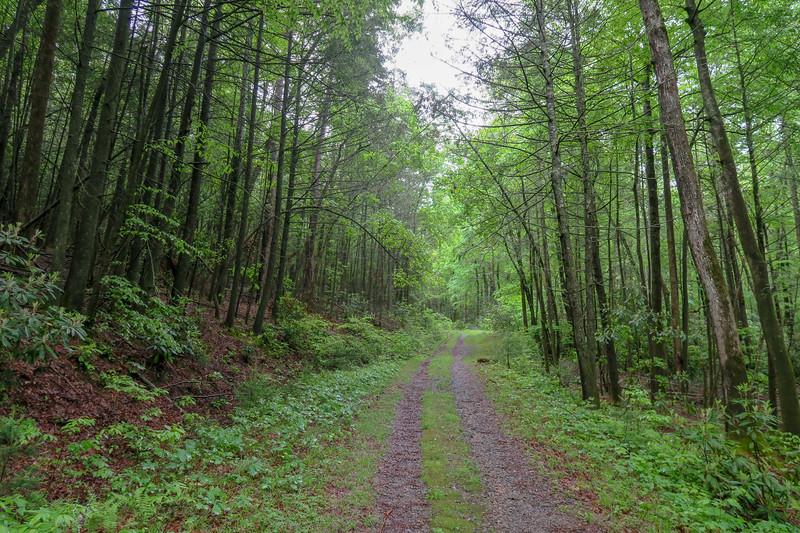 Explorer Loop Trail/F.R. 479H -- 2,370'