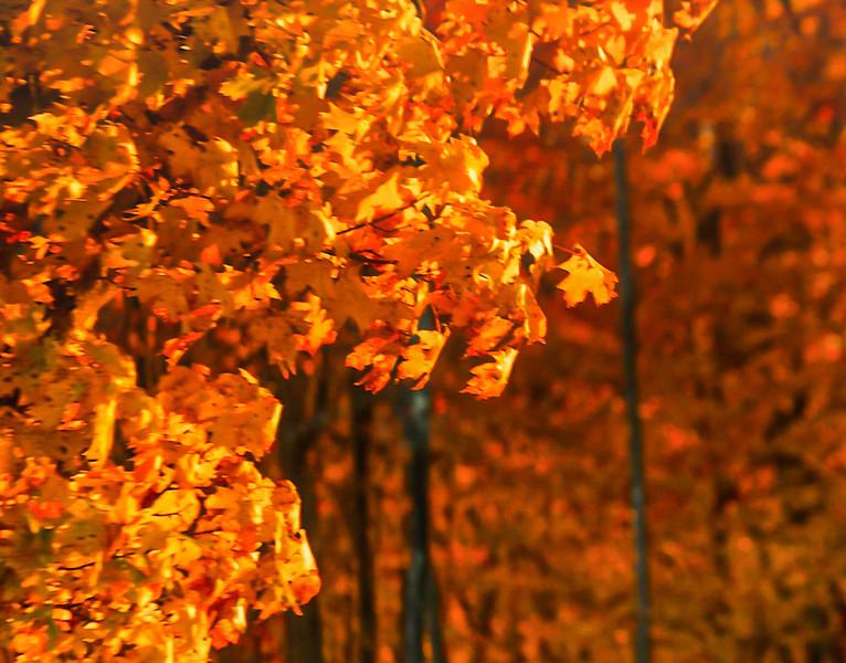 fall in Sherman 2-2-6-Edit-Edit-Edit-Edit-3.jpg
