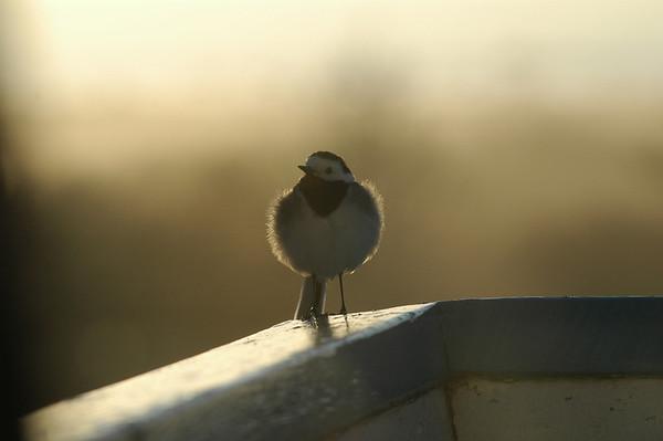 Fåglar/Birds Sweden